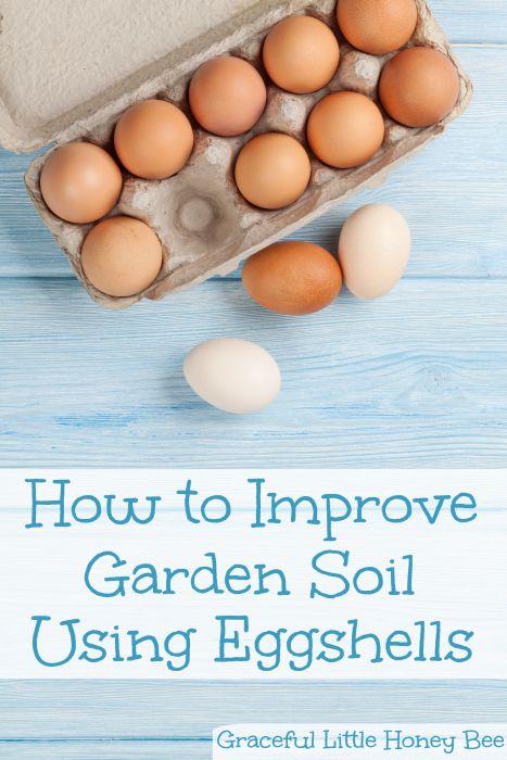 Improve Garden Soil Using Eggshells | 20 Garden Tips And Hacks That Will Help You Become a Gardening Expert