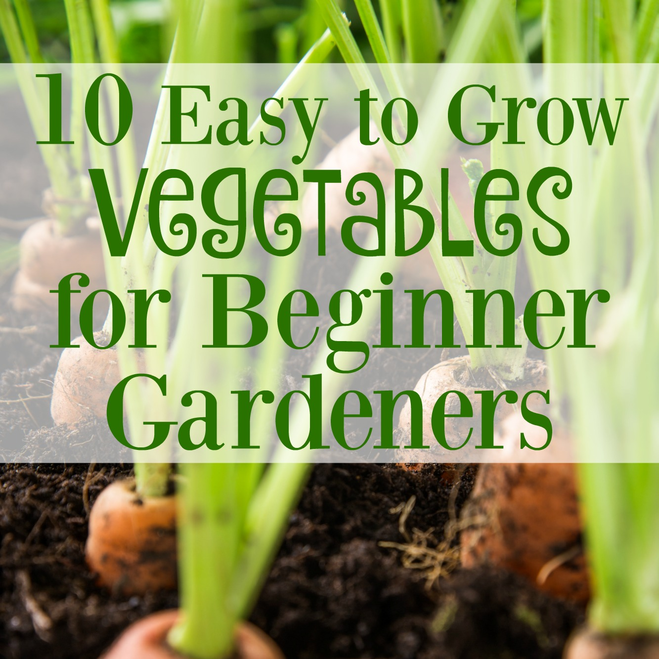 Creating Our First Vegetable Garden Advice Please: 10 Easy To Grow Vegetables For Beginner Gardeners