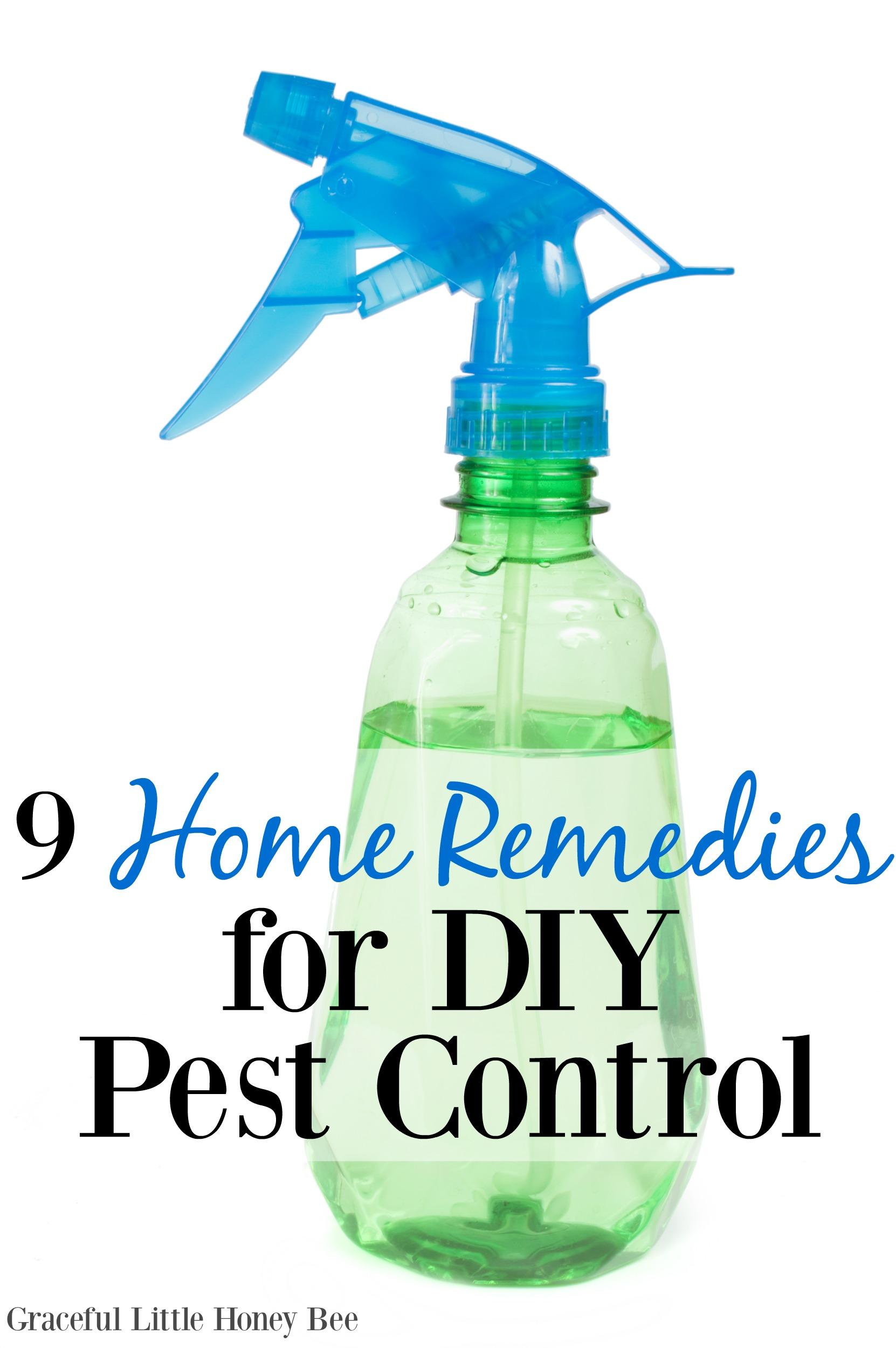 Home pest control home pest control how to home pest control how to images solutioingenieria Images